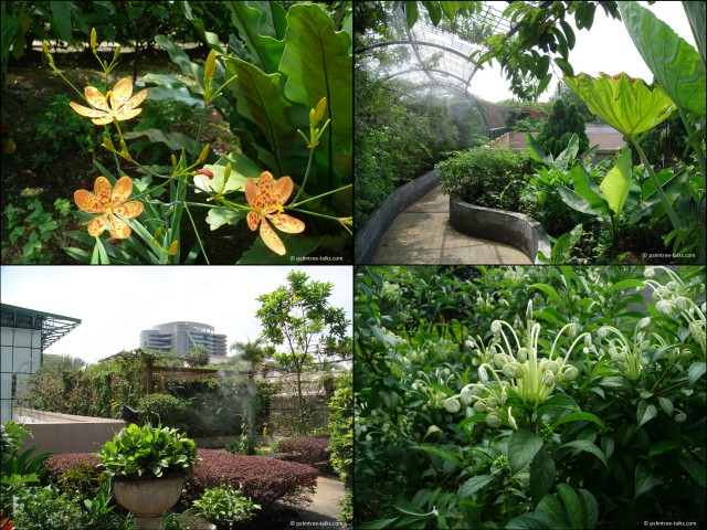 The Secret Garden on the rooftop of 1Utama shopping mall in Kuala Lumpur, as it was in 2010.