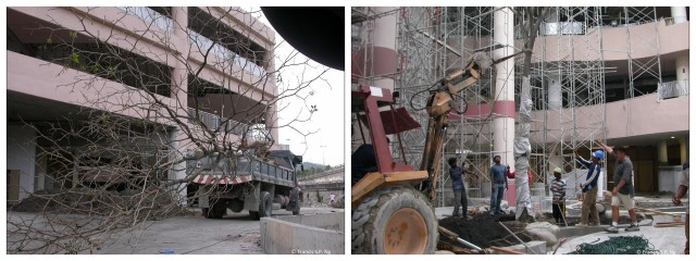 Tree on its way to 'the rainforest', created in 2003 inside a shopping mall in Kuala Lumpur (left). Lifted by a crane and lowered from the opening on top of the atrium, the tree finds its destination (right).