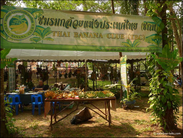 At the stand of the Thai Banana Club new species are promoted.