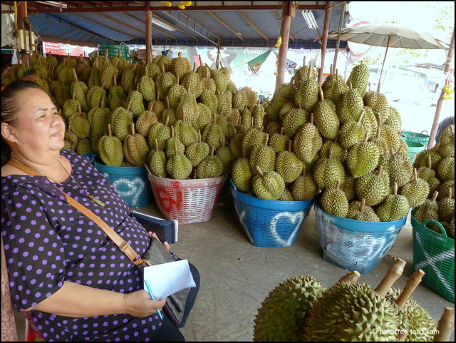 The lady trader keeps track of the amount of fruit coming in. She obviously only buys the best and greatest durians.