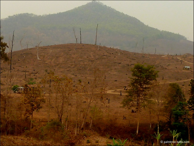 From January to April, the north of Thailand looks like a disaster area. For miles on end one drives through burnt or smoldering hills.