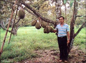 Dr. Songpol Somsri as a young scientist, with the first results of cross-pollination of durian varieties.