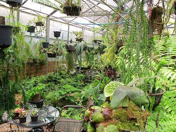 The greenhouse of Wanna Pinijpaitoon
