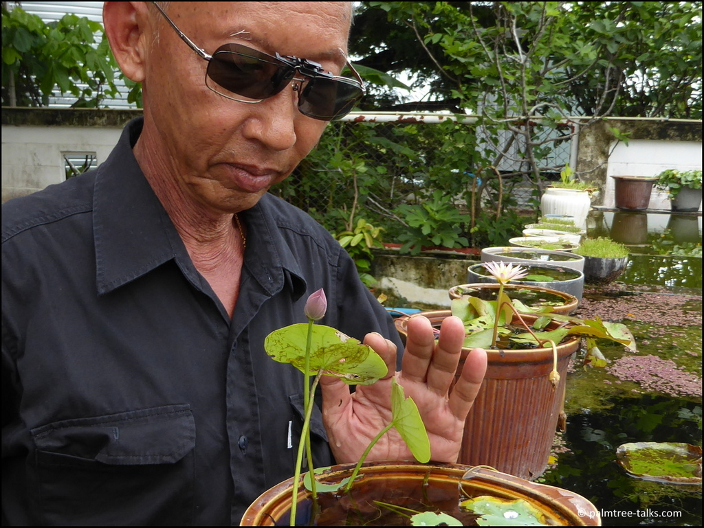 "His private garden is on the rooftop. ""But heavy water tubs on a rooftop are dangerous, so I only grow the small varieties of lotus and water lilies. Most of my other plants I bring to the nursery. I'm here five days a week, so I can enjoy them more."""