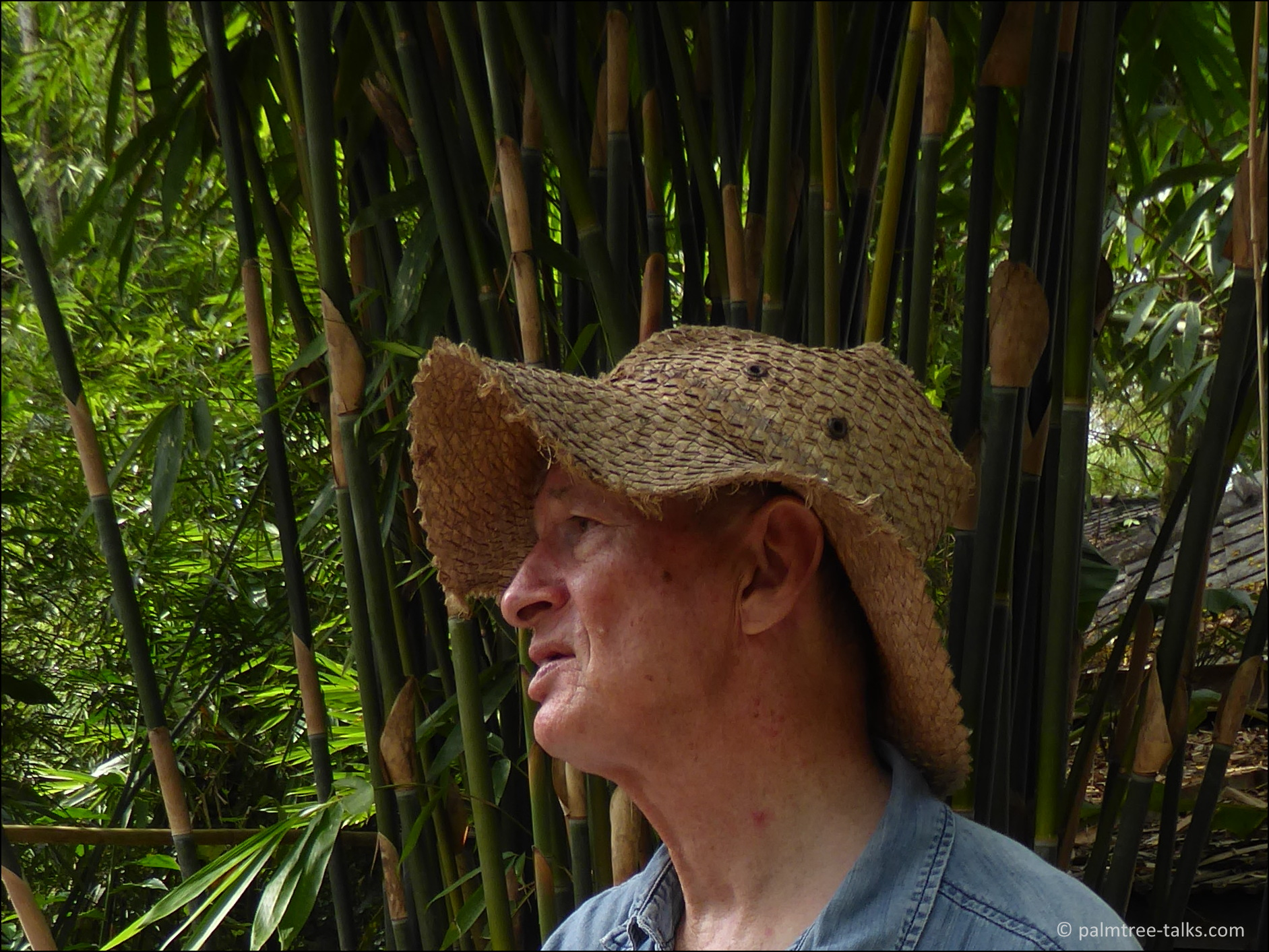 """""""I am interested in a bamboo species if it is unknown or rare. Or if it grows in a strange way."""""""