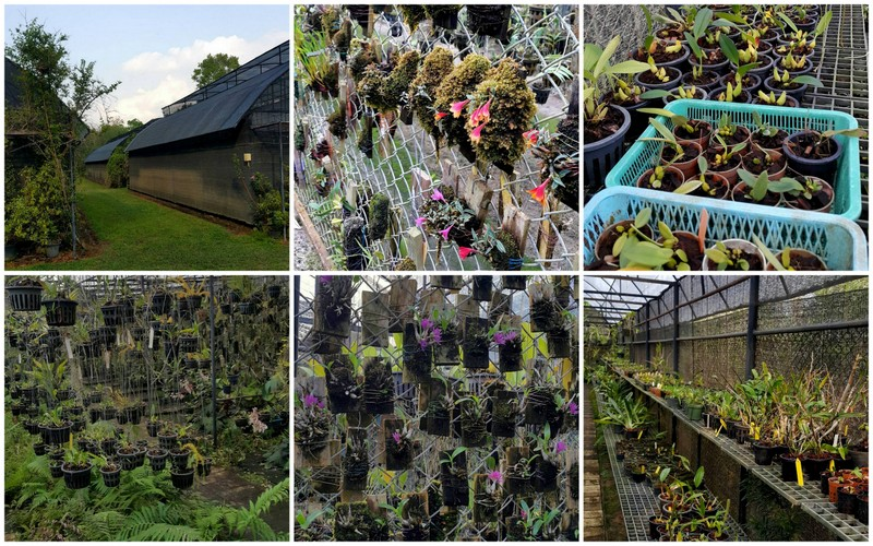 At the elevation of 900 metres Patana has 4 acres of land, dominated by large greenhouses. At the elevation of 900 metres Patana has 4 acres of land, dominated by large greenhouses.  Once a month he visits his garden, taken care of by two gardeners. (© photos Patana Thavipoke)